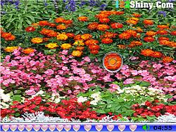 Hidden Hearts Flower Garden