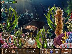 Hidden Treasures Of The Sea